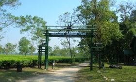 Gorumara-National-Park