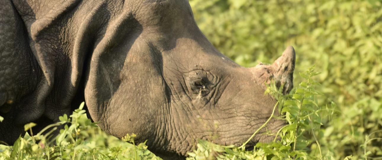 rhino-manas-national-park