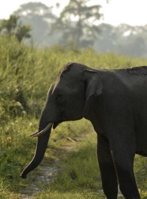 Elephant- Methla Watchtower