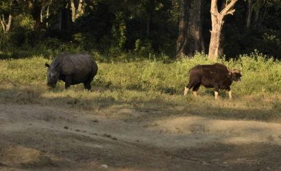 rhino-gaur-jaldapara-national-park