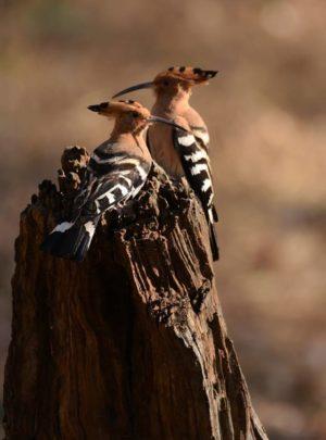 Hopoo-Buxa-Tiger-Reserve