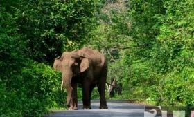 elephant-lataguri