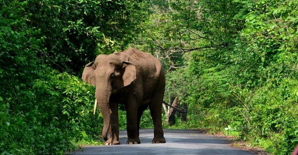 elephant-buxa-jayanti-road