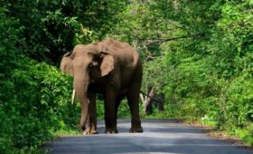 buxa-jayanti-road