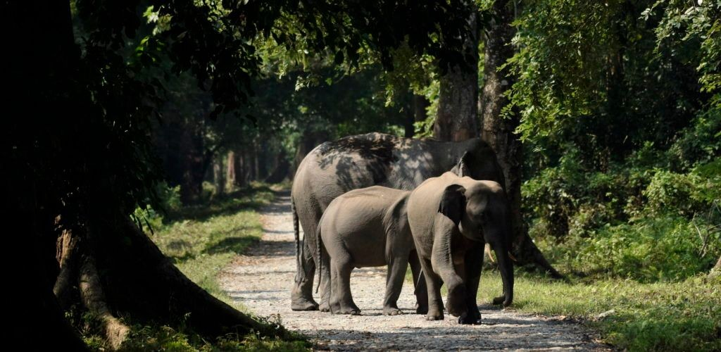 elephant-herd-gorumara-national-park