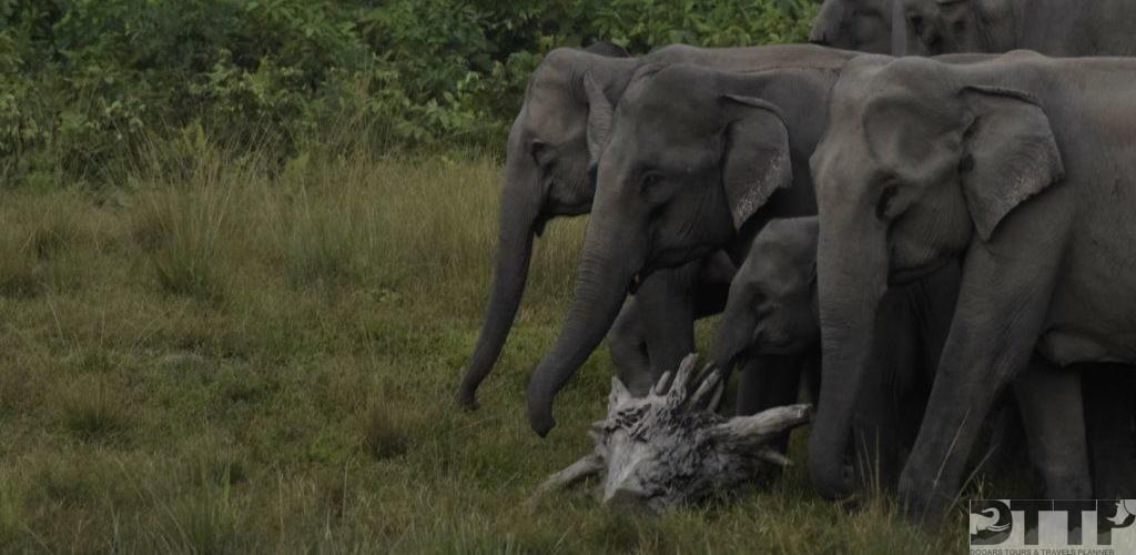elephant-herd-manas-national-park