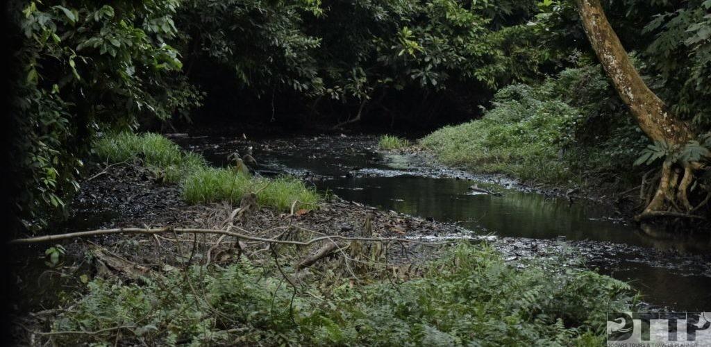 forest-stream-chilapata-jungle