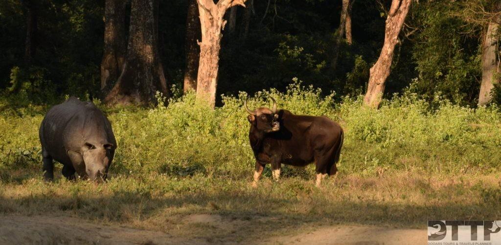 gaur-hollong-bungalow-jaldapara-national-park