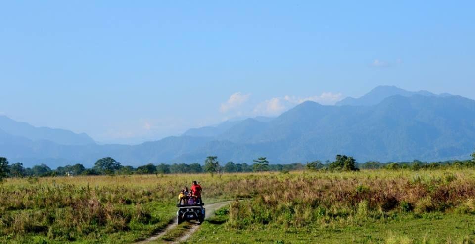 jungle-safari-manas-national-park
