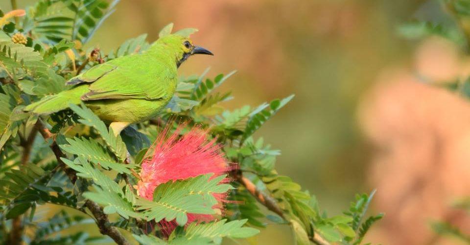 mountain-bird-rishyap