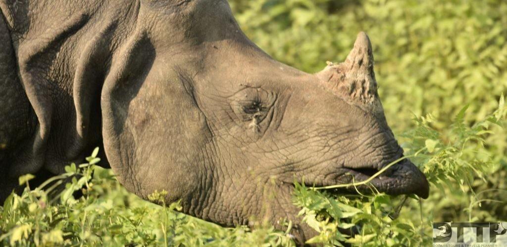 rhino-infront-of-resort-manas