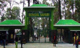 bengal-safari-leopard