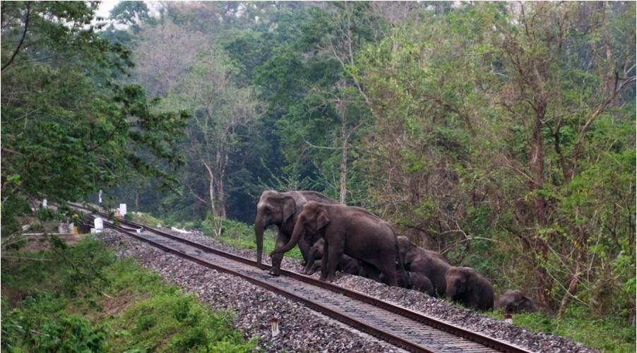 elephnat-herd-rajabhatkhawa
