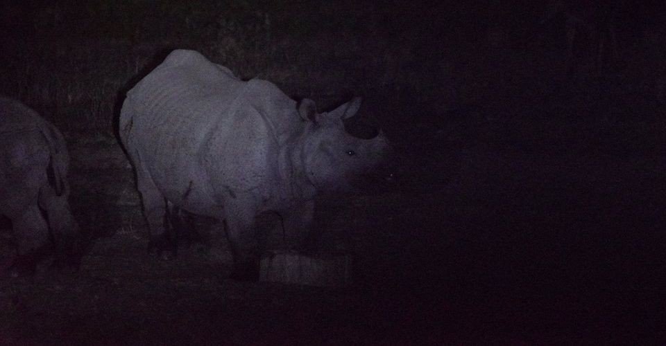 rhino-hollong