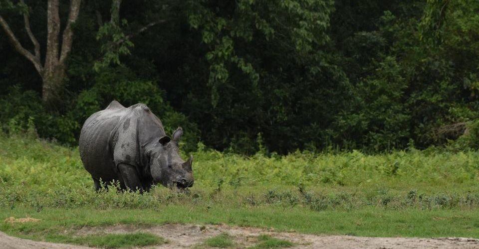 rhino-jaldapara