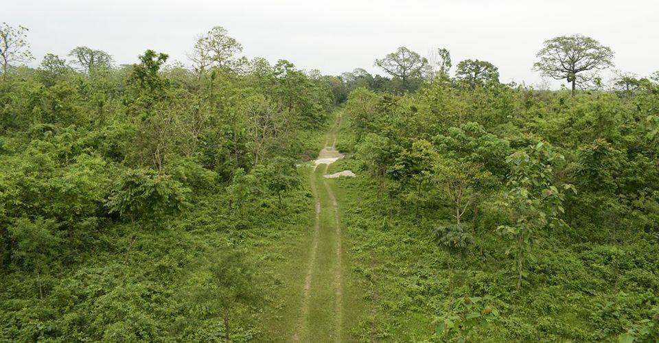 chunia-watchtower-buxa-tiger-reserve