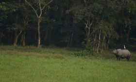medla-gorumara-national-park