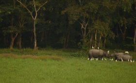 rhino-medla-gorumara-national-park