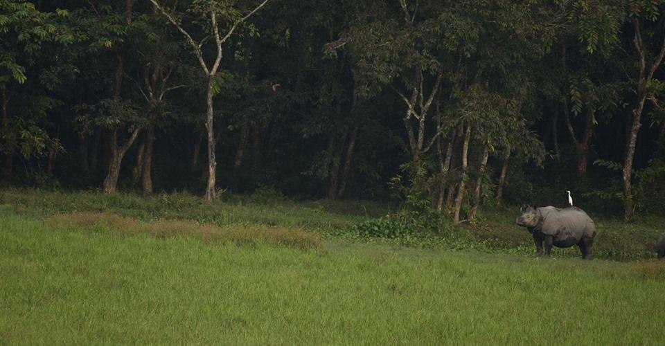 medla-gorumara-national-park