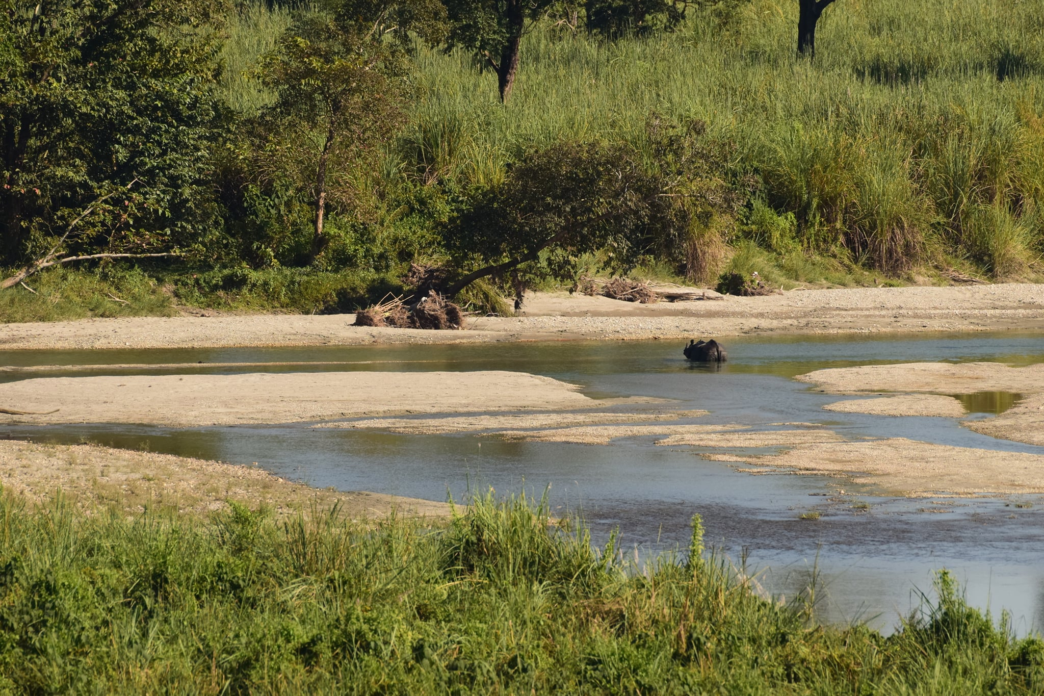 rhino-jatraprasad-watchtower