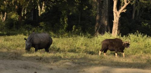 rhino-gaur-hollong-jaldapara-national-park