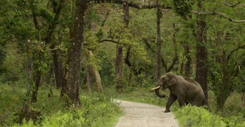 elephant-jaldapara