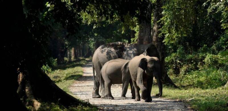 elephant-herd-gorumara-national-park